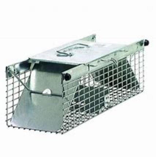 Where to find ANIMAL LIVE TRAP  SKUNK SIZE in Bigfork